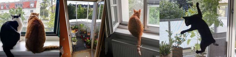 Katzenschutz ohne Bohren für Fenster, Türen und Balkone